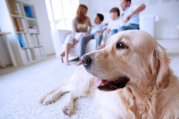 страховка домашних животных